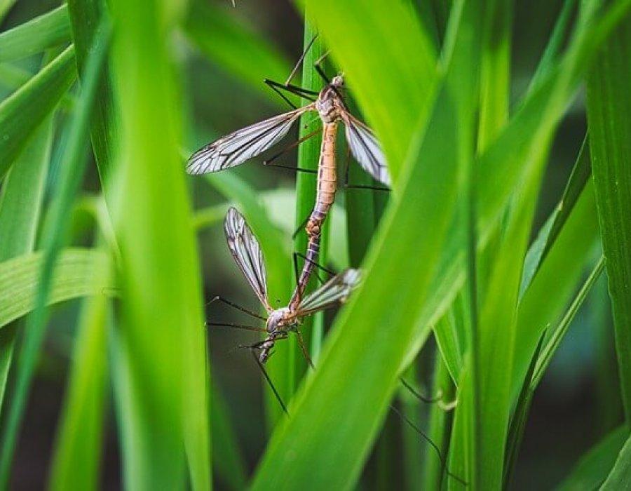 Rimedi fai da te per le punture di zanzara
