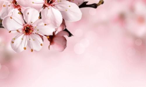 Fiori, pollice verde e il loro significato