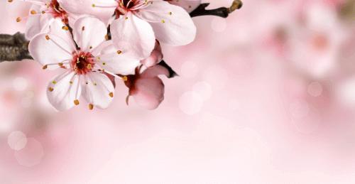 fiori come prendersi cura e fiori essiccati